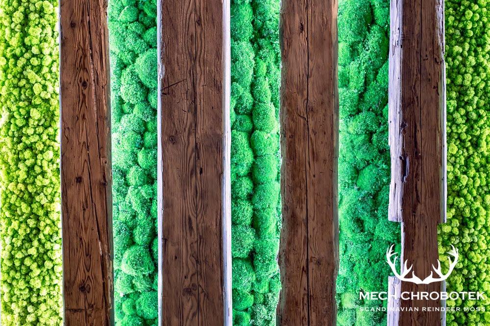Mech na ścianie z drewna