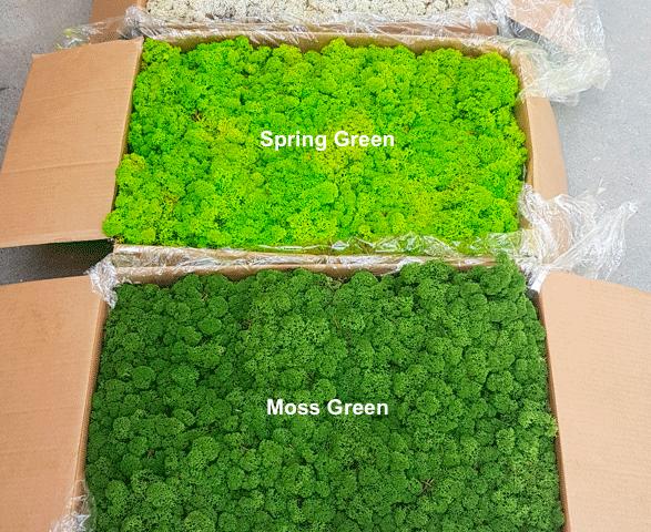 Zestawienie kolorów 5kg (tutaj moss green->medium green)