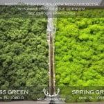 porównanie kolorów chrobotka jasno-zielony i ciemno-zielony