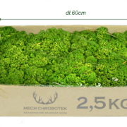karton chrobotek 2,5kg