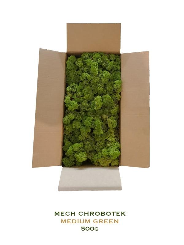 mech leśny chrobotek medium green