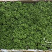 mech karton 5kg naturalny zielony