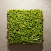 panel mech norweski 50x50cm spring green na żywo