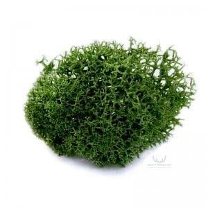 mech-chrobotek-ciemny-zielony