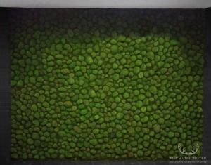 mech kulisty na ścianie