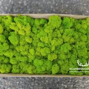 mech-chrobotek-finski-oczyszczony-springgreen-jasnozielony-500g1
