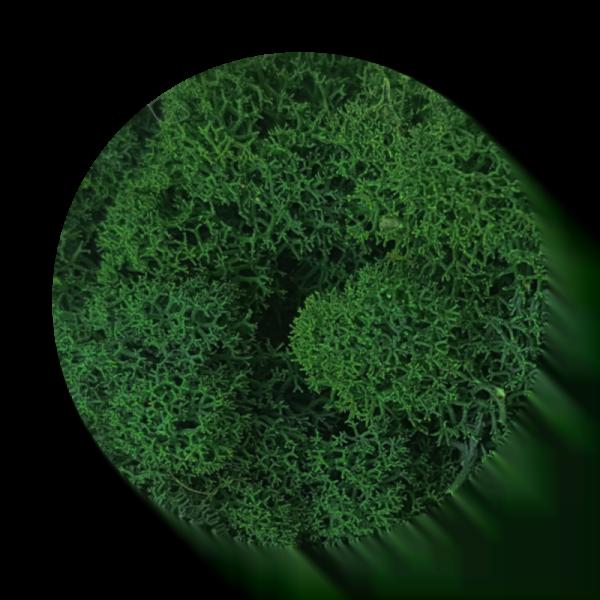 mech-chrobotek-oczyszczony-darkgreen-ciemnozielony-500g