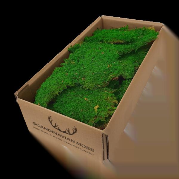 mech-plaski-lesny-trawiasty-jasnoozielony-jasna-zielen-200g