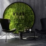 Round moss on wall