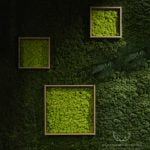 Dark green moss wall background