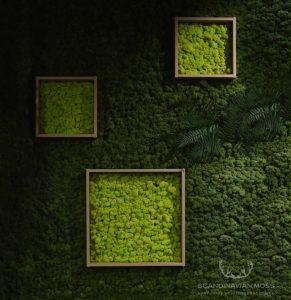 Dark green moss wall background