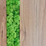 Decorative moss spring green reindeer moss