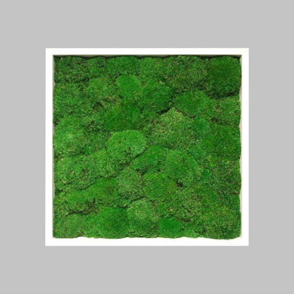 obraz-bialy-52x52cm-50x50cm-drewniany-mech-poduszkowy-kulisty