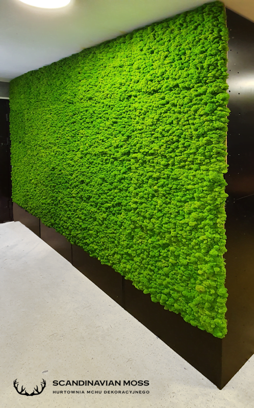 Chrobotek spring green ściana