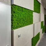 Chrobotek w ścianie z betonu - zaokrąglone brzegi